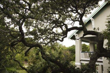 House with live oak tree.