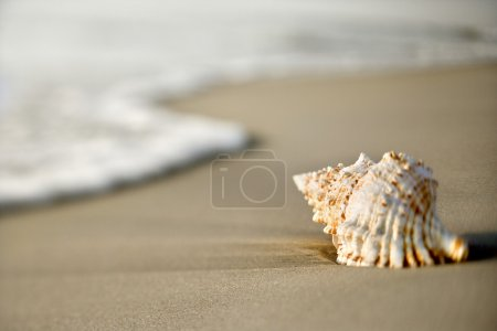 Seashell on beach.