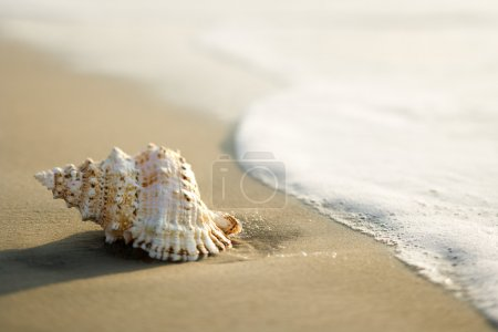 Shell on beach.
