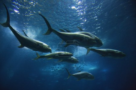 Photo for Fish swimming in aquarium in Lisbon, Spain. - Royalty Free Image