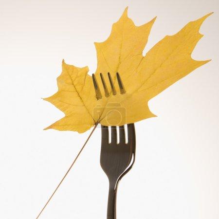 Single yellow Maple leaf pierced by a dinner fork....
