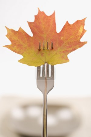 Red and green Maple leaf pierced by a dinner fork....