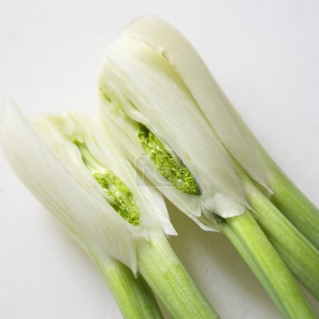 Photo for Close up of stalk and bulb of fennel cut in half. - Royalty Free Image