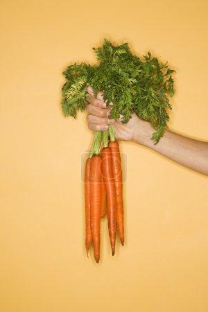 Photo pour Gros plan de femme tenant des tas de carottes sur fond jaune. - image libre de droit