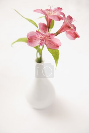Photo for Three pink Alstroemeria lilies in a white vase. - Royalty Free Image