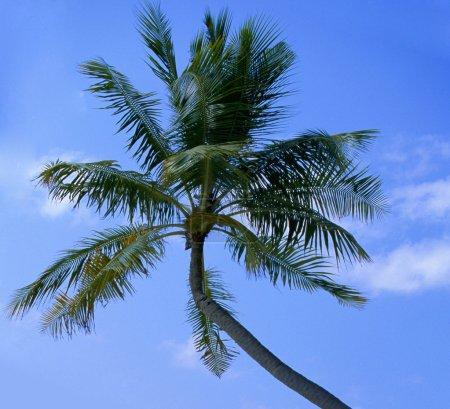 Dream scene. Beautiful palm tree over white sand beach