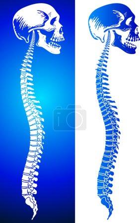 Man spine