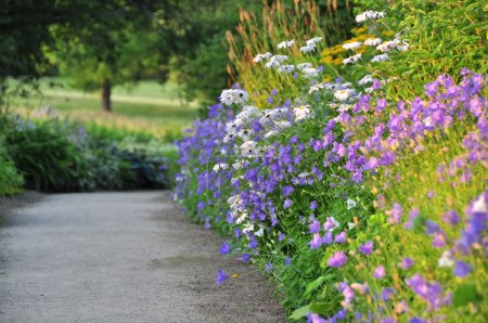 Empty Path With Floral Border