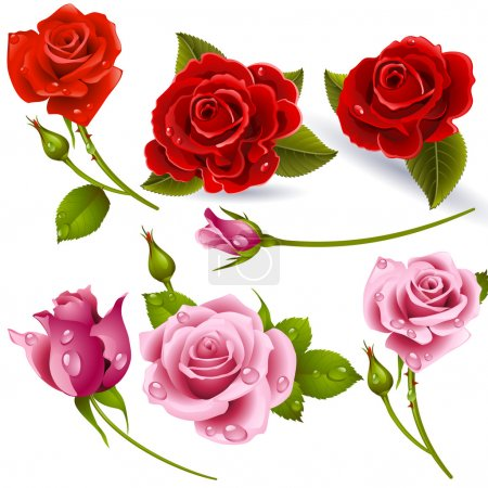 Illustration for Set of red roses - Vector image can be re-size to any limit - Royalty Free Image