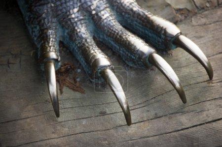 Metal dragon nails