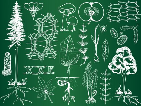 Illustration for Biology plant sketches on school board - botany hand-drawn illustration - Royalty Free Image