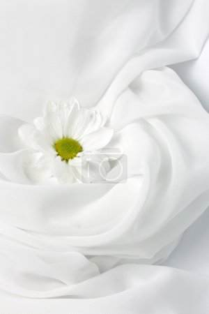 Photo for A chrysanthemum on white drapery - Royalty Free Image