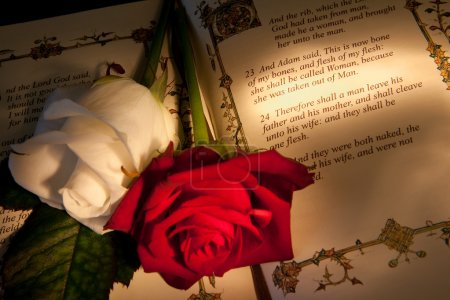 Photo for Roses and bible with Genesis text of Adam and Eve, a typical wedding text - the book illustration is copied from a 400 years old bible. - Royalty Free Image