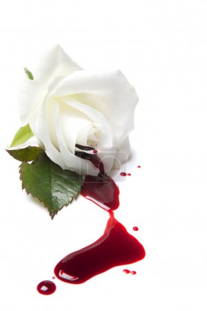 Photo for White rose with red blood flowing away - Royalty Free Image