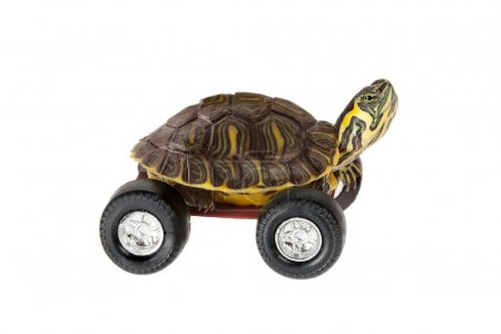 Photo for Funny little turtle using four wheels to gain speed - Royalty Free Image