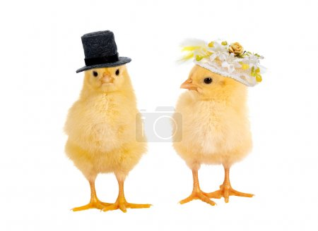 Chick wedding