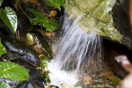 Photo pour Pluies torrentielles dans la forêt tropicale - image libre de droit