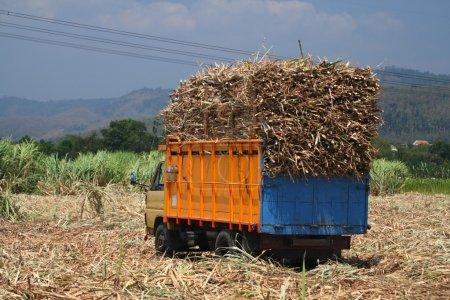 Foto de Camión de caña de azúcar con carga completa - Imagen libre de derechos