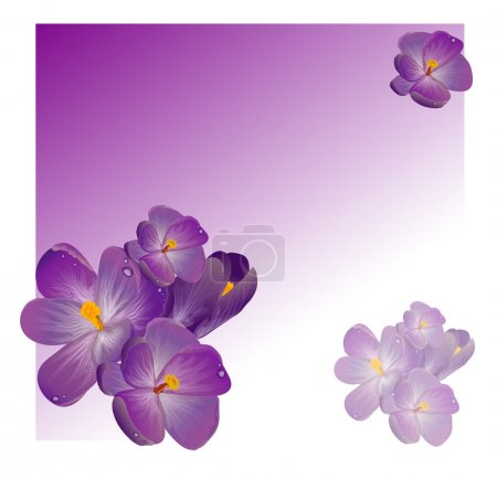 Illustration pour Fleurs printanières pourpres avec feuilles vertes de trèfle - image libre de droit
