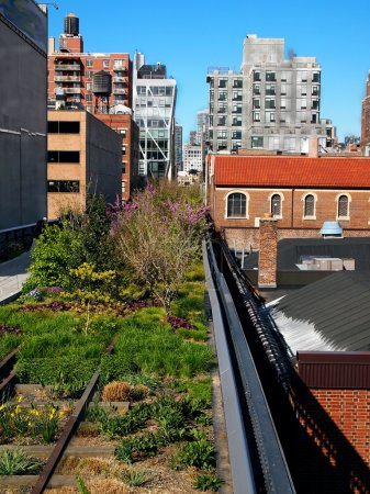 The High Line Park in