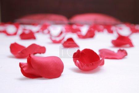 Foto de Pétalos de rosas rojas sobre una cama de hotel blanco - Imagen libre de derechos