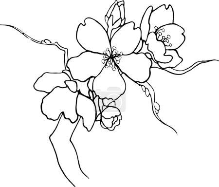 Illustration pour Branche florissante de Sakura. Vecteur . - image libre de droit