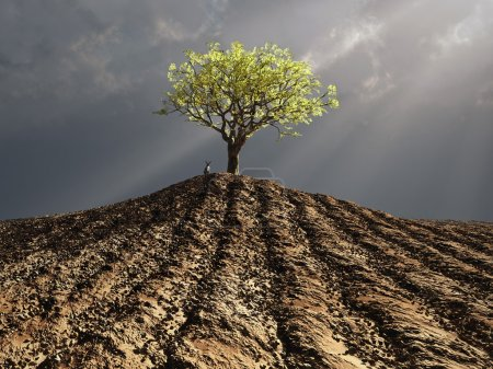 Lonely tree in the middle of plowed field