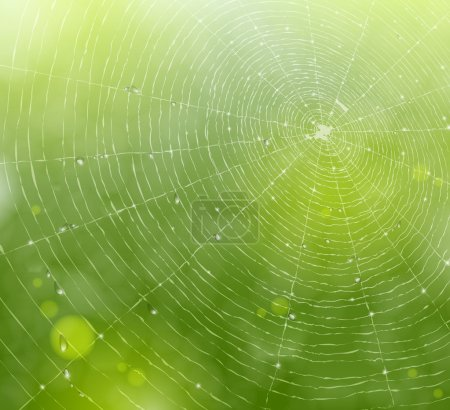Illustration for Natural background with a spider web and drops. Eps 10 - Royalty Free Image