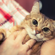 The Cat with big eyes in the hands of the boss...