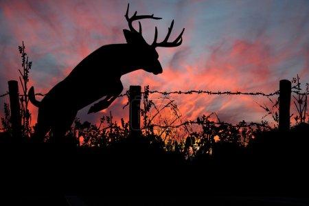 Bock springt bei Sonnenuntergang über Stacheldrahtzaun