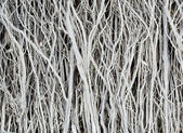 Dried twigs striped wood texture pattern background wallpaper