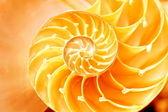 Oddíl shell Nautilus