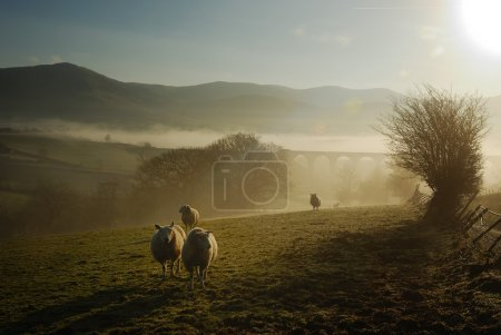 Photo for Misty Autumn Morning - England - Royalty Free Image
