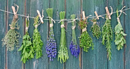 Photo for Various fresh herbs hanging on a leash in front of a wooden wall - Royalty Free Image