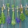 Various fresh herbs hanging on a leash in front of...