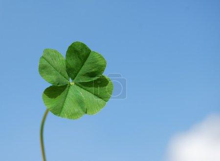 Photo pour Trèfle à quatre feuilles sur fond de ciel - image libre de droit