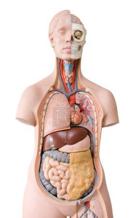 Medical dummy