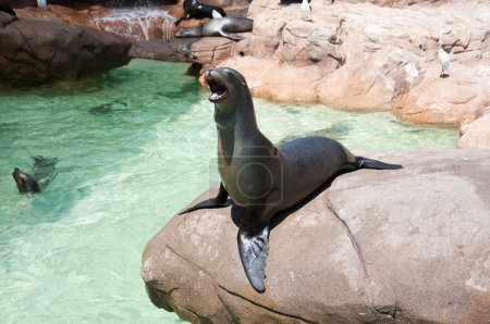 Sea lion in San Diego Sea World