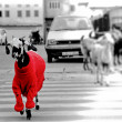 Goat in the red sweater walking through the road....