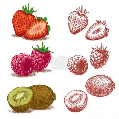 Illustration pour Ensemble de fruits : Fraise, Framboise, Kiwi. Illustration vectorielle. Les types de fichiers sont disponibles en .AI, .EPS pour les formats vectoriels et .JPEG . - image libre de droit