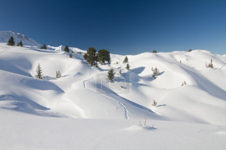 Fresh powder snow landscape