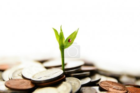 Growing from money
