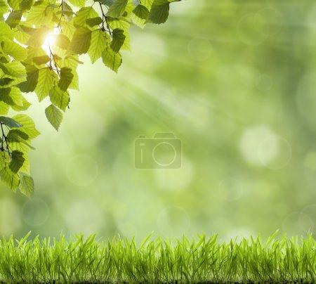 Beautiful Nature Bokeh