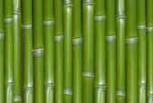 Green background of fresh hard chinese bamboo
