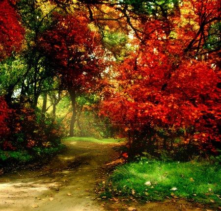 Photo pour Arbres dans le parc d'automne - image libre de droit