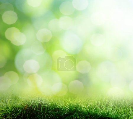 Photo for The beautiful backdrop of grass on the background bokeh - Royalty Free Image