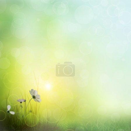 Background of grass. bokeh