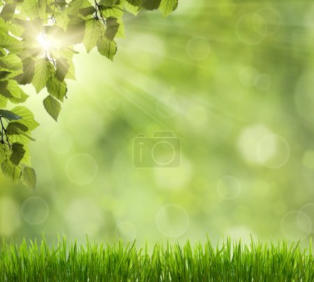 Beautiful Nature Bokeh