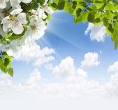 "Постер, картина, фотообои ""Apple цвета в небе"""