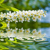 Beauty spring flowers